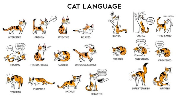 Things Cats Do And What They Mean