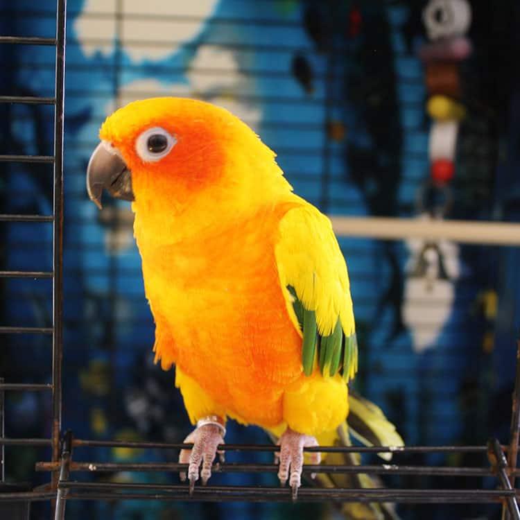 Bird Sitting