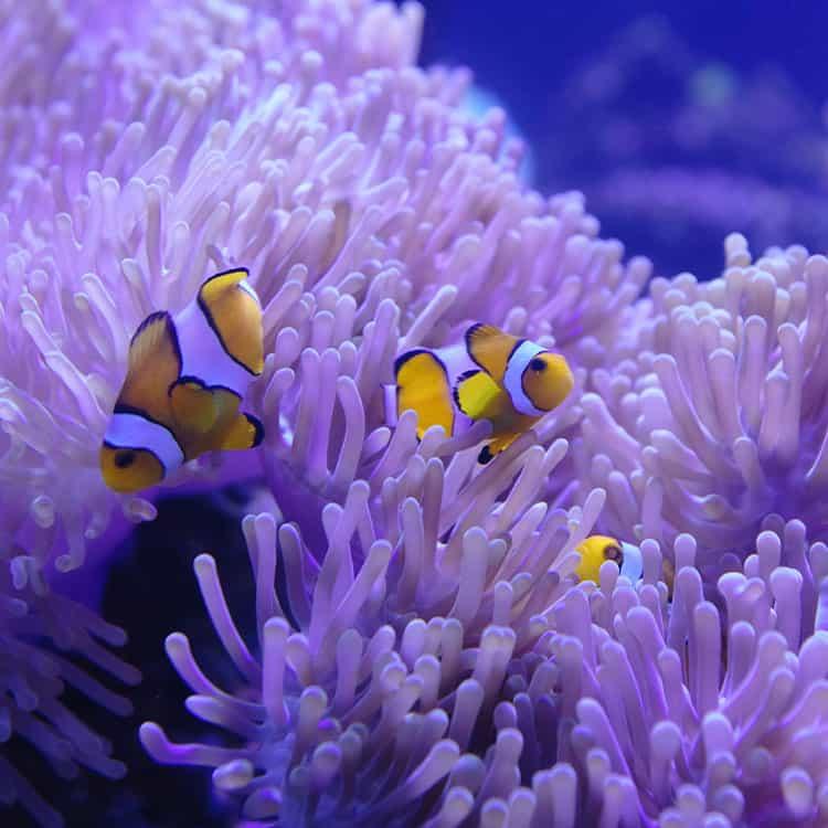Exotic Fish Care