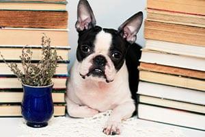 Meet & Greet - Paws Pet Care